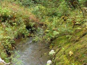 southeast-alaska-rainforest
