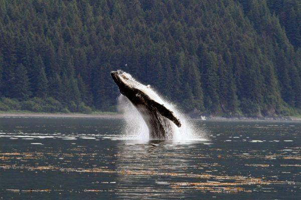 whale21