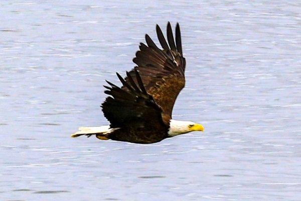wildlife24